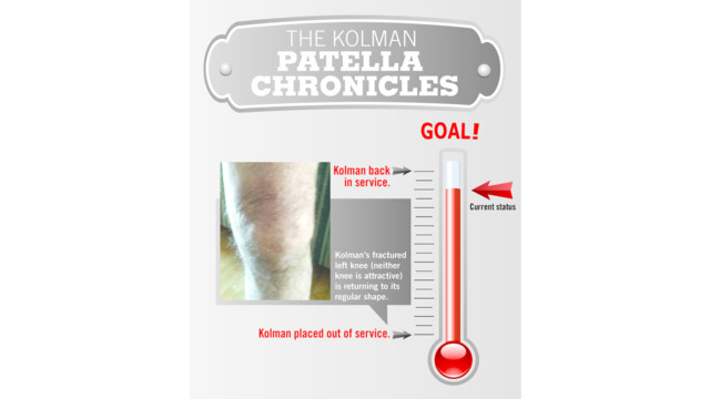 The Kolman Patella Chronicles – The Healing
